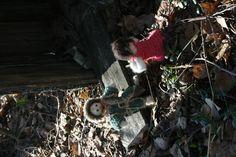 Isä ja äiti löysivät perheelle uuden mahdollisen kodin, vanhan hyljätyn linnunpöntön