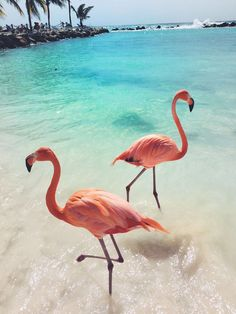 Pink flamingos at sea beach. TRavel Tips and Tricks. Found this cute flamingo photo while browsing :) Beautiful Birds, Animals Beautiful, Beautiful Places, Animals And Pets, Cute Animals, Pink Animals, Exotic Animals, Flamingo Pictures, Disney Instagram