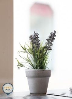 My Story Hotel Ouro - Lisboa Concept, Plants, Design, Gold, Planters, Plant, Planting