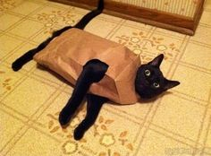 A black cat wearing a paper bag like a dress. I Love Cats, Cute Cats, Funny Cats, Funny Animals, Cute Animals, Crazy Cat Lady, Crazy Cats, Here Kitty Kitty, Cats And Kittens