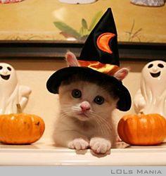 Cute Halloween Cat