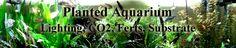 Planted Aquarium information! http://www.americanaquariumproducts.com/AquariumPlants.html