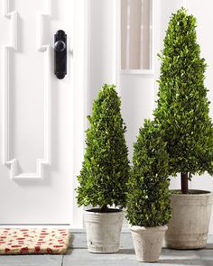 Reminiscent of Roman times; natural boxwood topiary trees lend a romantic feel to doorways and walkways.