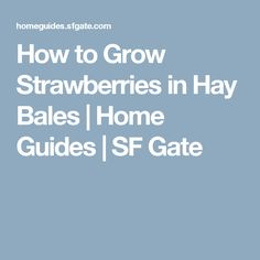 How to Grow Strawberries in Hay Bales | Home Guides | SF Gate