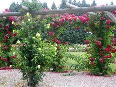 Köynnösruusut Hibiscus Garden, Seeds For Sale, Wildflower Seeds, Texas Hill Country, Instagram Feed, Wild Flowers, Beautiful Places, Bloom, Plants