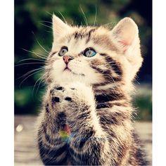 $4.2 AUD - 5D Diy Diamond Painting Cute Little Cat Embroidery Cross Stitch Craft Home Decor #ebay #Home & Garden