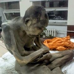 Mummified Monk 200 years may still be alive, says expert and Physician of the Dalai Lama