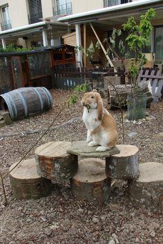 Kaninchengehege-Einrichtung