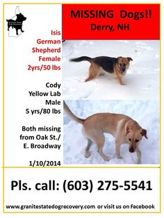 #LOSTDOG 1-10-14 DERRY #NH TWO DOGS LOST 2 YEAR OLD #GSD FEMALE 50 LBSNO COLLAR 5 YEAR OLD YELLOW #LAB MALE 80 LBS BLACK COLLAR 603-275-5541 https://www.facebook.com/photo.php?fbid=673525739370279&set=a.668328036556716.1073741849.129767517079440&type=1