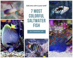Colorful fish for your saltwater tank Saltwater Tank, Saltwater Aquarium, Fishing For Beginners, Fish Tanks, Colorful Fish, Animals, Comet Goldfish, Animales, Animaux