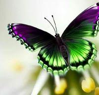 À la Recherche de Liberté: Tout est dans la tête Everything, Interpersonal Relationship, Butterflies, Search