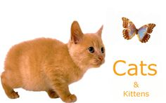 Cat health issues index. Have a question about a cat health issue? Find the answer here!