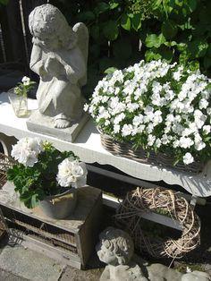 mijn tuin 2010 - Ellen Vlinder - Picasa Webalbums