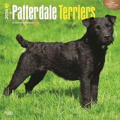Patterdale Terriers Calendar 2016