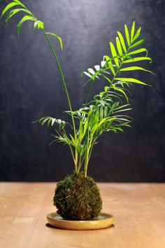 The Floral Fixx is also doing Kokedama Plants. Hang them, set them on a vase. We think they're so cool.