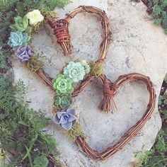 """410 Likes, 15 Comments - Botanical Bright (@botanicalbright) on Instagram: """"Spending this week making lots of these cute little Succulent Heart Wreaths for all your V-Day…"""""""