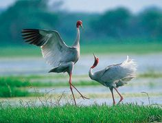 121clicks.comRoyal Rajasthan - A Colorful Paradise for Photographers - 121Clicks.com
