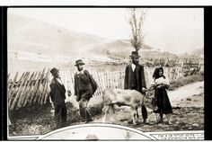 Jewish merchants purchase a calf for the Sabbath from a peasant woman in the Carpathian Mountains, Czechoslovakia. January 11, 1925, Alter Kacyzne.