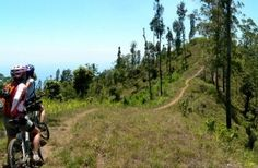 A better way to explore the cooler climes of this tropical island than from your favourite saddle! Bali Activities, Road Bike, Biking, Offroad, Island, Adventure, Explore, Cycling, Off Road