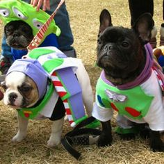 To inFrenchity and Beyond!, French Bulldogs as Buzz Lightyear for Halloween 🐾❤️