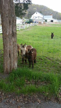 Mini donkey farm 4 / 30 / 16