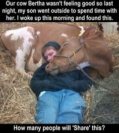 * * How many people would even consider being so kind-hearted and going to sleep with the cow? Look how grateful she is!""