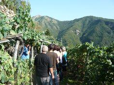 Wine tasting at the vineyard! .  #learnitalian #studyitalian #studyinitaly #travelitaly #italianculture #italianlanguage