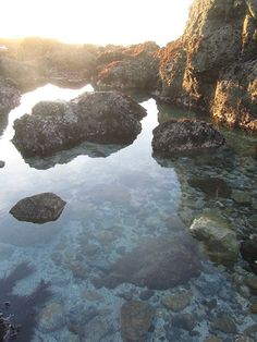 Try This: Tidepooling in Northern California : Condé Nast Traveler