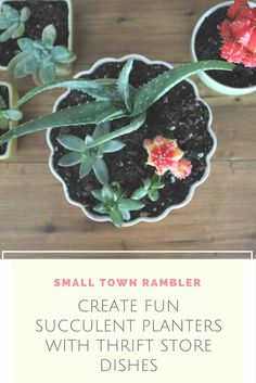 Create Fun Succulent Planters with Thrift Store Dishes Terrarium Plants, Succulents, Succulent Planters, Thrifting, Crafty, Dishes, Fun, Store, Flowers