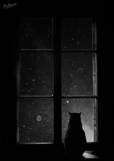 Witch Aesthetic: black cat familiar staring outside the window at the starry sky. Foto Gif, Gif Animé, Black Paper, Black Wallpaper, Belle Photo, Cat Art, Black And White Photography, Anime Art, Artsy