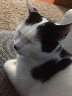 Stevo Katze | Pawshake
