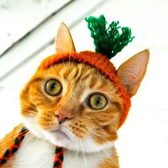 Carrot Costume for Cats - Hand Knit Cat Hat