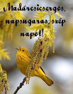 Reggeli üdvözlet,Vidam napot mindenkinek!!,Vianney Szent János gondolata,Kellemes napot!!!,Kívánok szép és kellemes napot!!!,Szep napot mindenkinek!!!,Adjon Isten egészséget,,Kívánni neked jó éjszakát!,Szép jó reggelt!,Szép , jó reggelt !, - memi59 Blogja - Idézetek-Versek-Alföldy Géza , Idézetek-Versek-Tormay Cécile,1848-március-15,1956-Október - 23,A költészet napja- április 11,A Magyar Kultúra Napja-Jan.22,Anyáknapi versek,köszöntők,Anyanyelvről-Haza-Szűlőfölről,ARATAS,Böjte Csaba… Mother Nature, Good Morning, About Me Blog, Pictures, Betty Boop, Smiley, Gates, Emoji, Sunshine