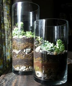 Terrariums: It might be my eyes but i don't see charcoal in here...keeps the plants healthy and the glass clear.