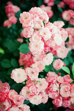 Flowers. Pink. xx