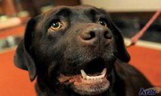 Dog nose inspires better explosives 'sniffer'