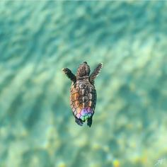 Best photos, images, and pictures gallery about baby sea turtle - sea turtle facts. Best photos, images, and pictures gallery about baby sea turtle - sea turtle facts. Cute Turtles, Baby Turtles, Turtle Baby, Happy Turtle, Cute Little Animals, Cute Funny Animals, Cute Creatures, Animal Photography, Amazing Photography