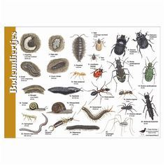 Herkenningskaart Bodemdiertjes Diy Nature, Nature Crafts, Moleskine, Pablo Picasso, Pond Dipping, Journal Vintage, Doodles, Nature Journal, Fauna