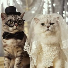 Love comes in all shapes and sizes.. cat wedding!