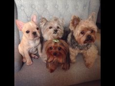 Puppy Playtime with Misa, Brody, Noah, & Toula - YouTube