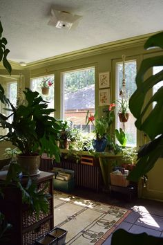 Natasha and the Plant-Filled Sunroom   really cool sunroom full of plants