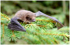 i love bats are cute.