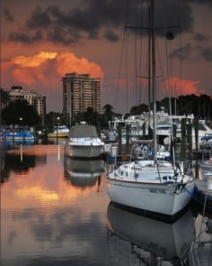 boats at Marina Jack's