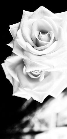 Rose, Flowers, Pink, Roses, Royal Icing Flowers, Floral, Florals, Flower, Bloemen