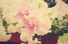 SUMMER FLOWERS POLAROID