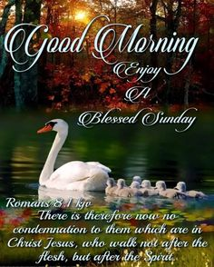 Happy Sunday Quotes, Good Day Quotes, Blessed Sunday, Quote Of The Day, No Condemnation, Sunday Images, Sunday Love, Morning Blessings, Biblical Inspiration