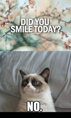 Usually I can relate to Grumpy Cat with it being Monday and all but not this week! If Grumpy Cat was a Coffee Lover I bet he would smile more. I wonder if Grumpy Cat is a Coffee Hater? Grumpy Cat Quotes, Grumpy Cat Humor, Grumpy Kitty, Grumpy Baby, Cats Humor, Kitty Cats, Memes Lol, Cat Memes, Funny Memes