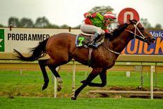 DANEWIN (Aus) B c 1991, Danehill (USA) - Cotehele House (GB), wins the 1995 Caulfield Stakes. Photo: Bronwen Healy Photography.