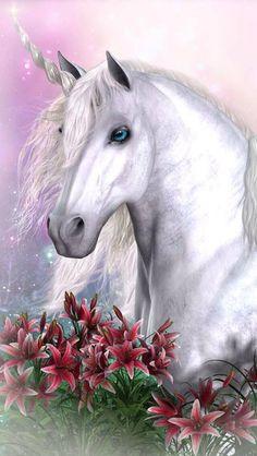 2015/01/31 unicorn