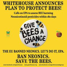 """President Obama issued a memorandum announcing the creation of a federal strategy to """"promote the health of honey bees and other pollinators. Lets Do It, Let It Be, Bee Free, Save Our Earth, Get Educated, Save The Bees, Bees Knees, Bee Keeping, Make Me Happy"""